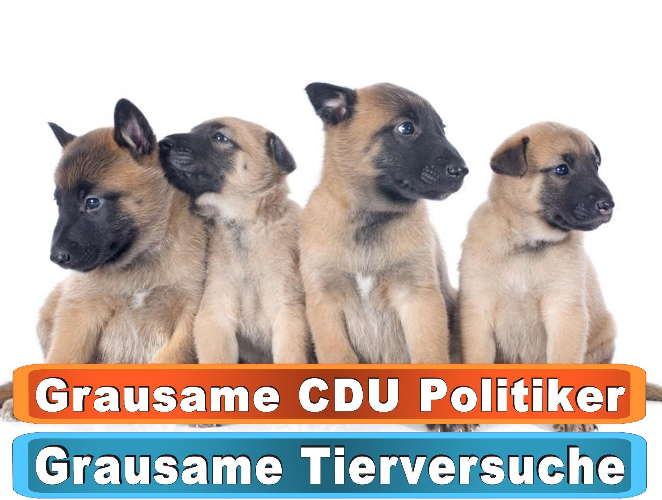 Hunde In Witten Bing