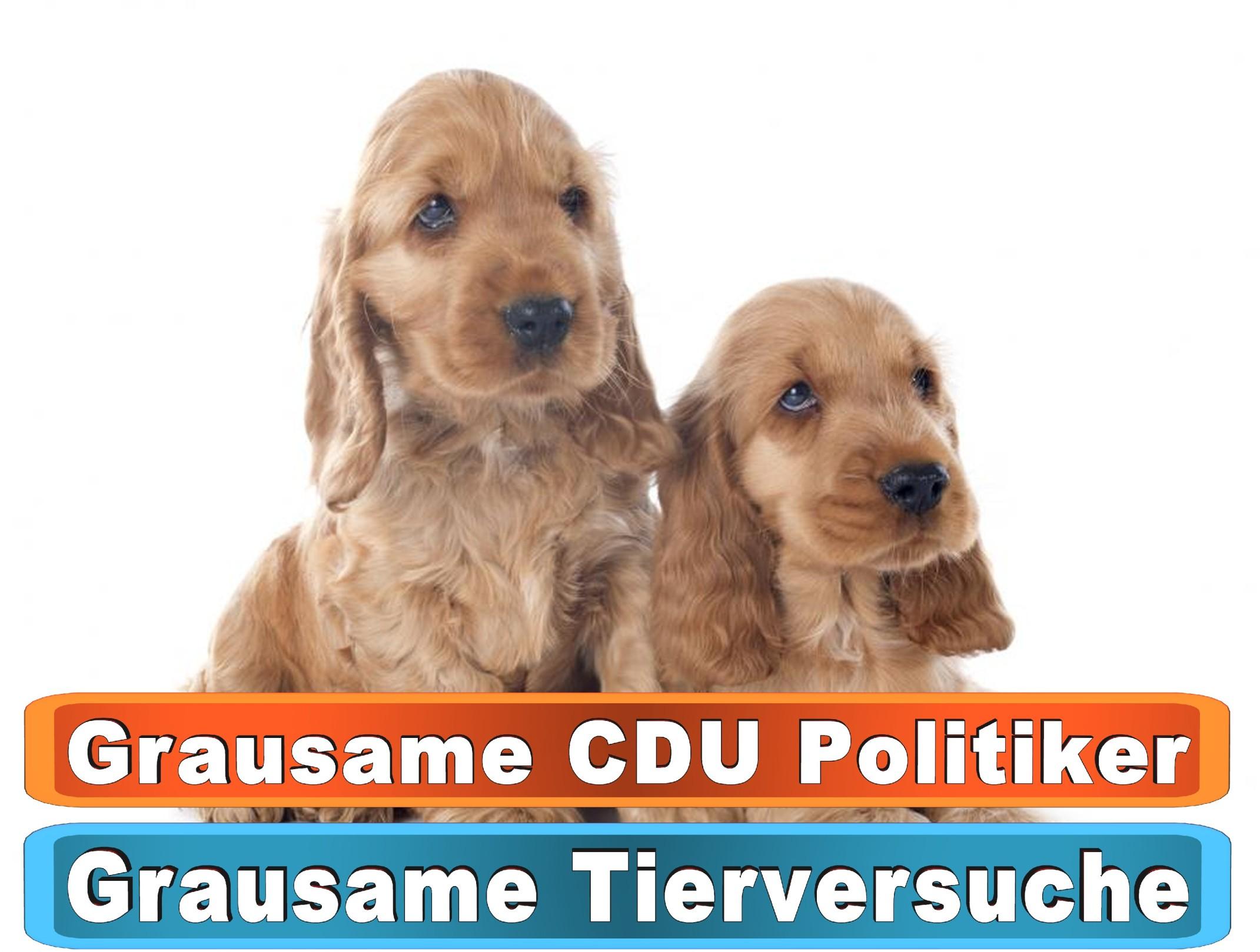 Hunde Kaufen Dortmund Bing