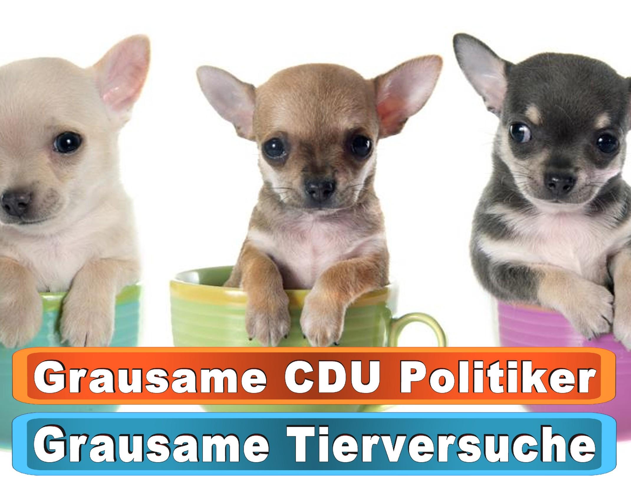 Hunde Kaufen Gnarrenburg Bing