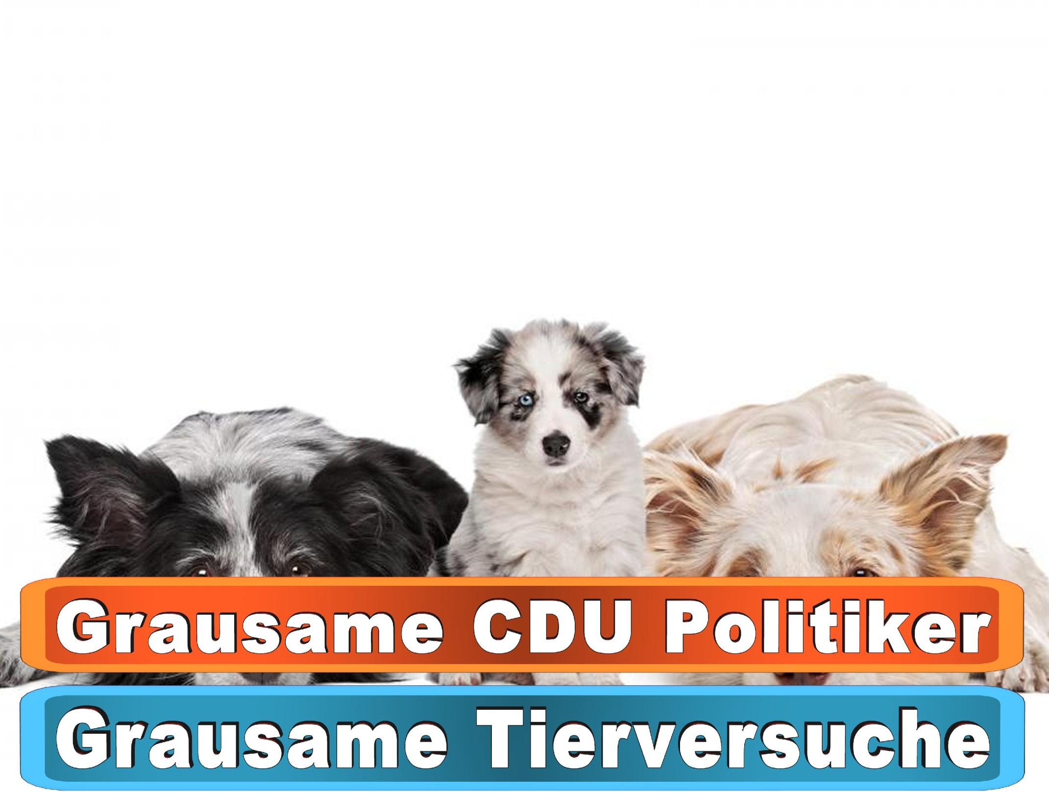 Hunde Kette Dawanda