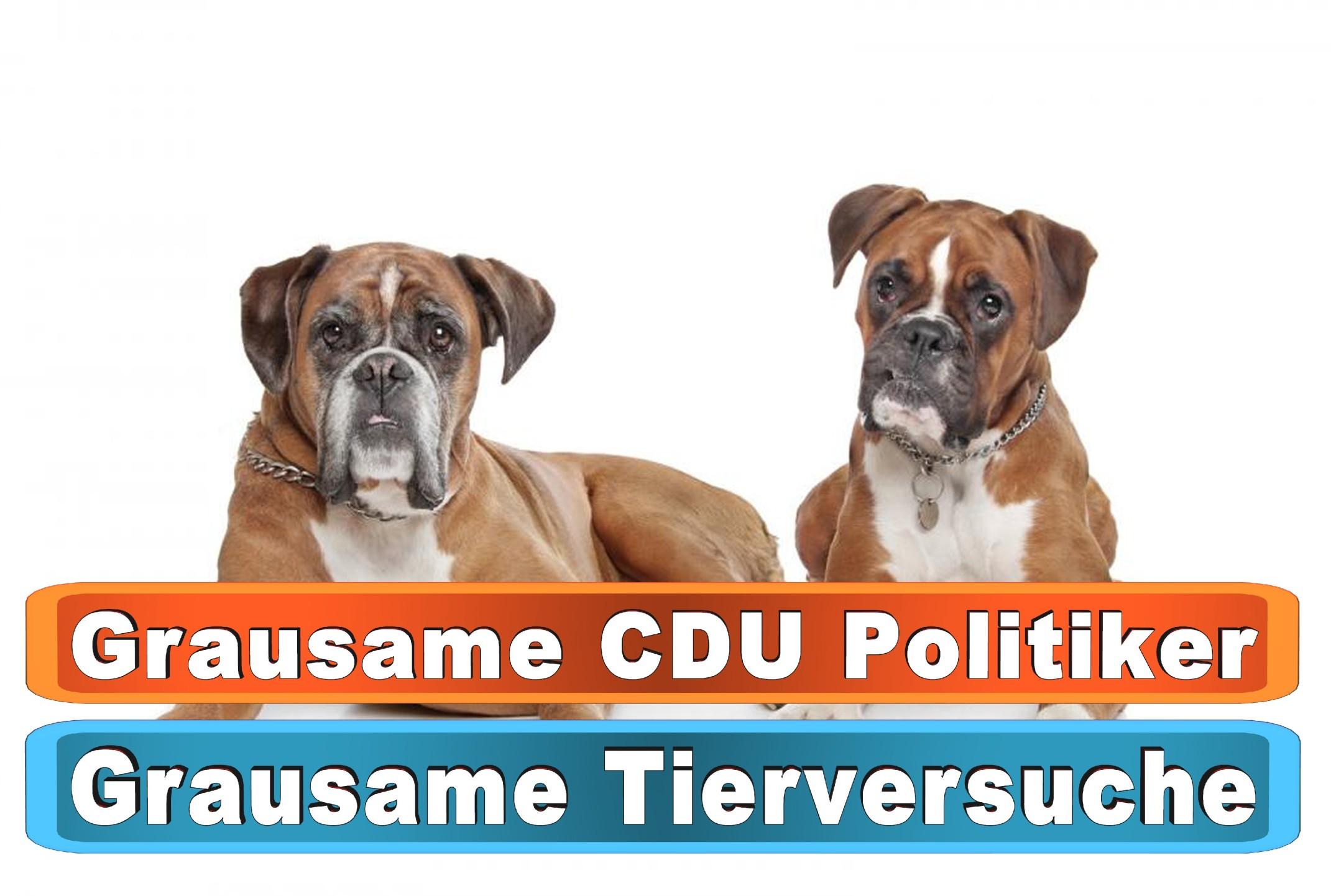 Hunde Leberwurst Tube Amazon