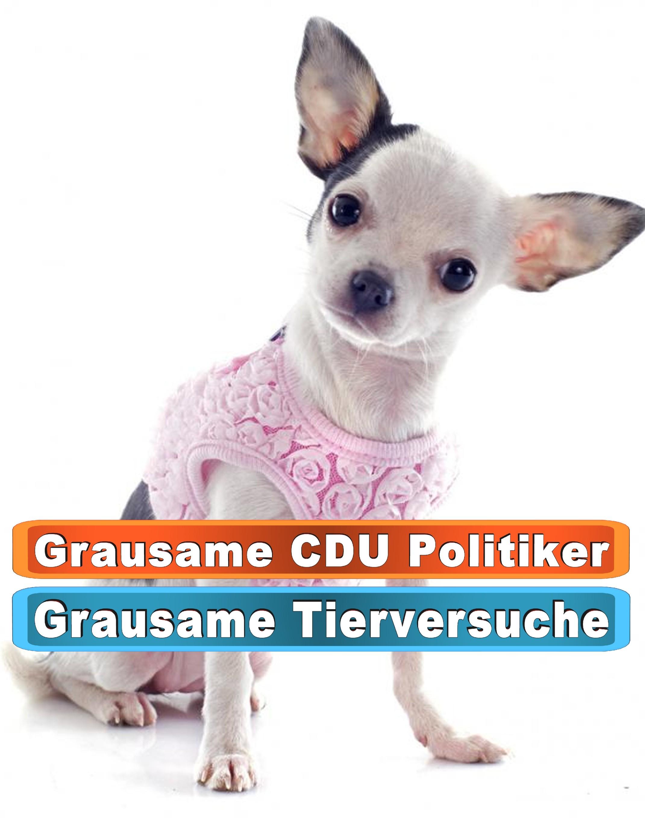 Hunde Mix Welpen Raum Finsterwalde Bing