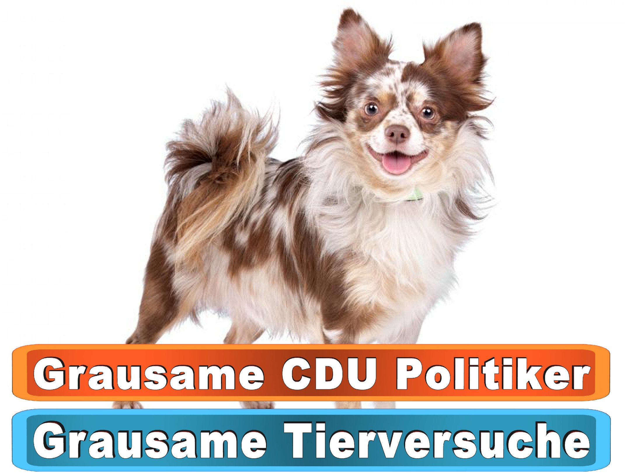 Hunde Nassfutter Google Amazon Yahoo Youtube