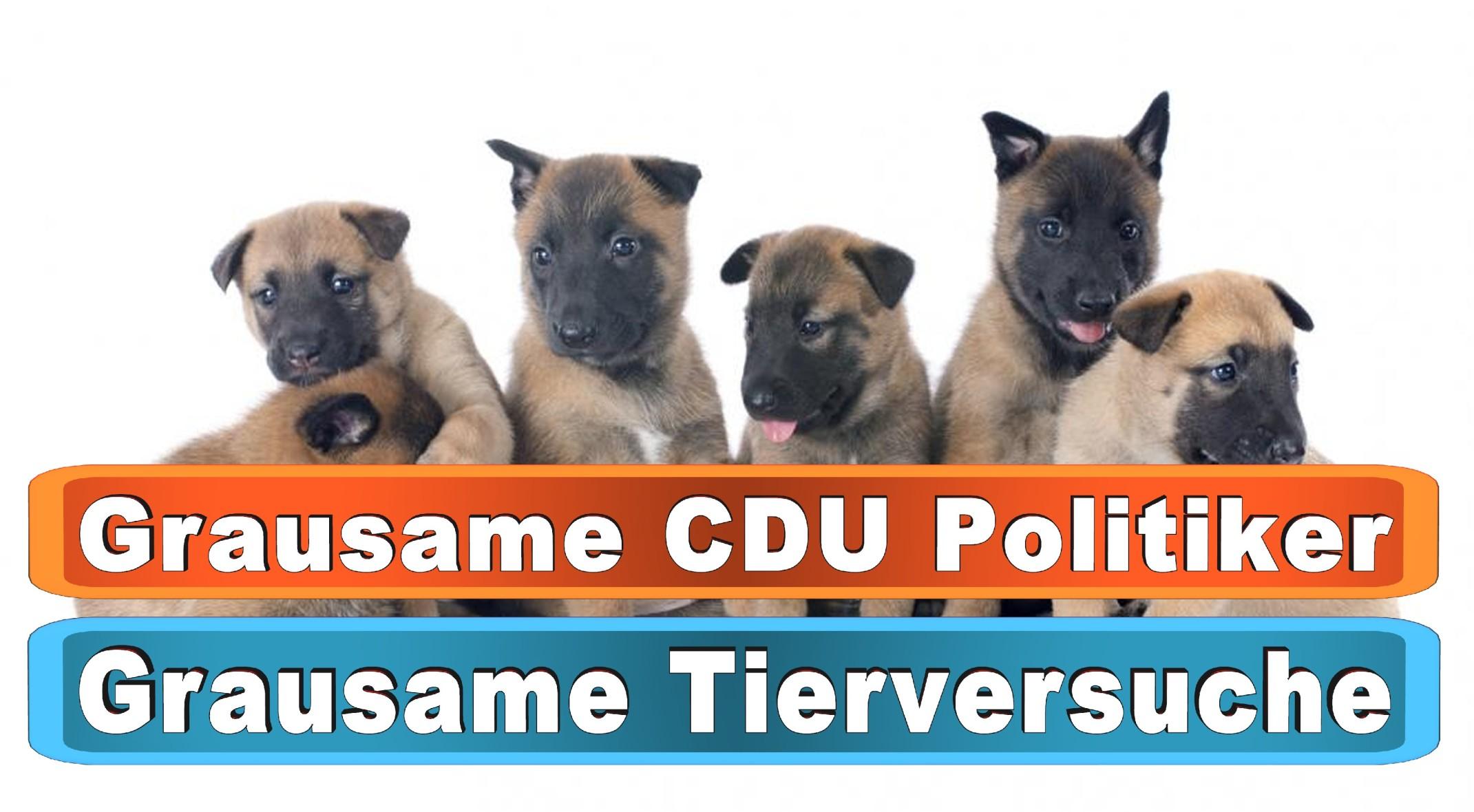 Hunde Nassfutter Test Stiftung Warentest Bing