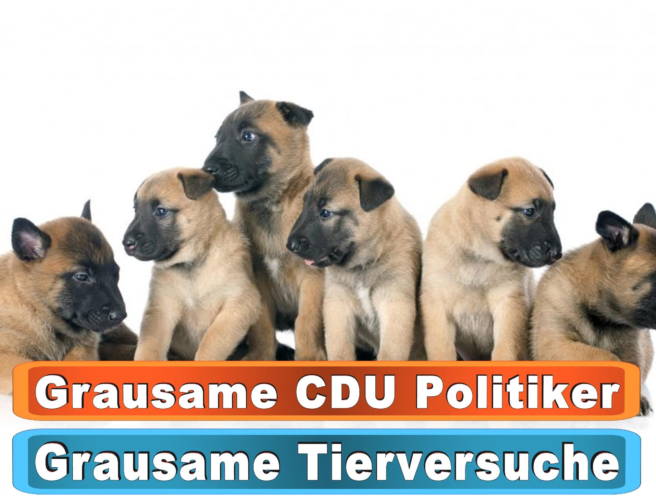 Hunde Not Bayern Bing