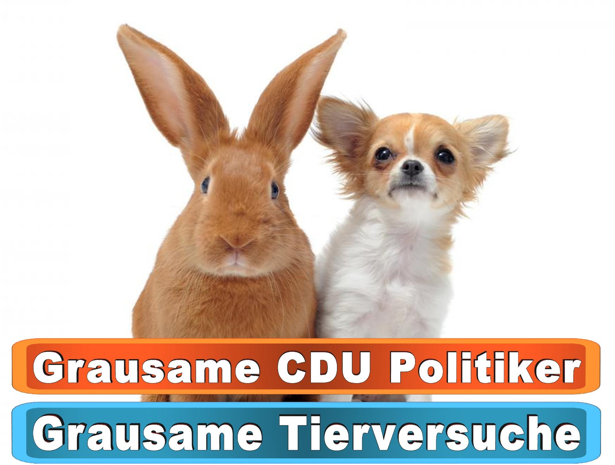 Hunde Pansion In Bayern Bing