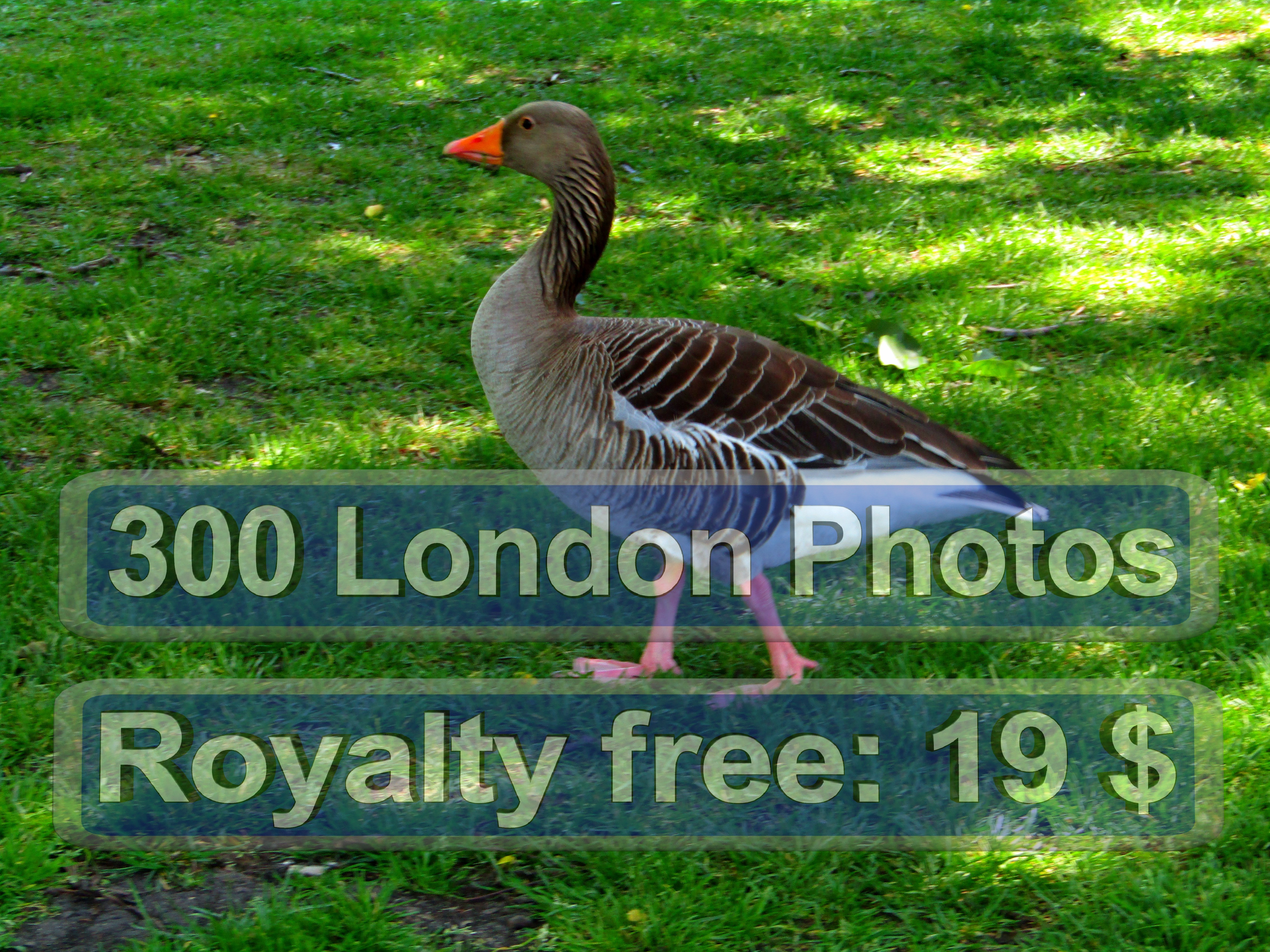 London High Quality Photo Printing