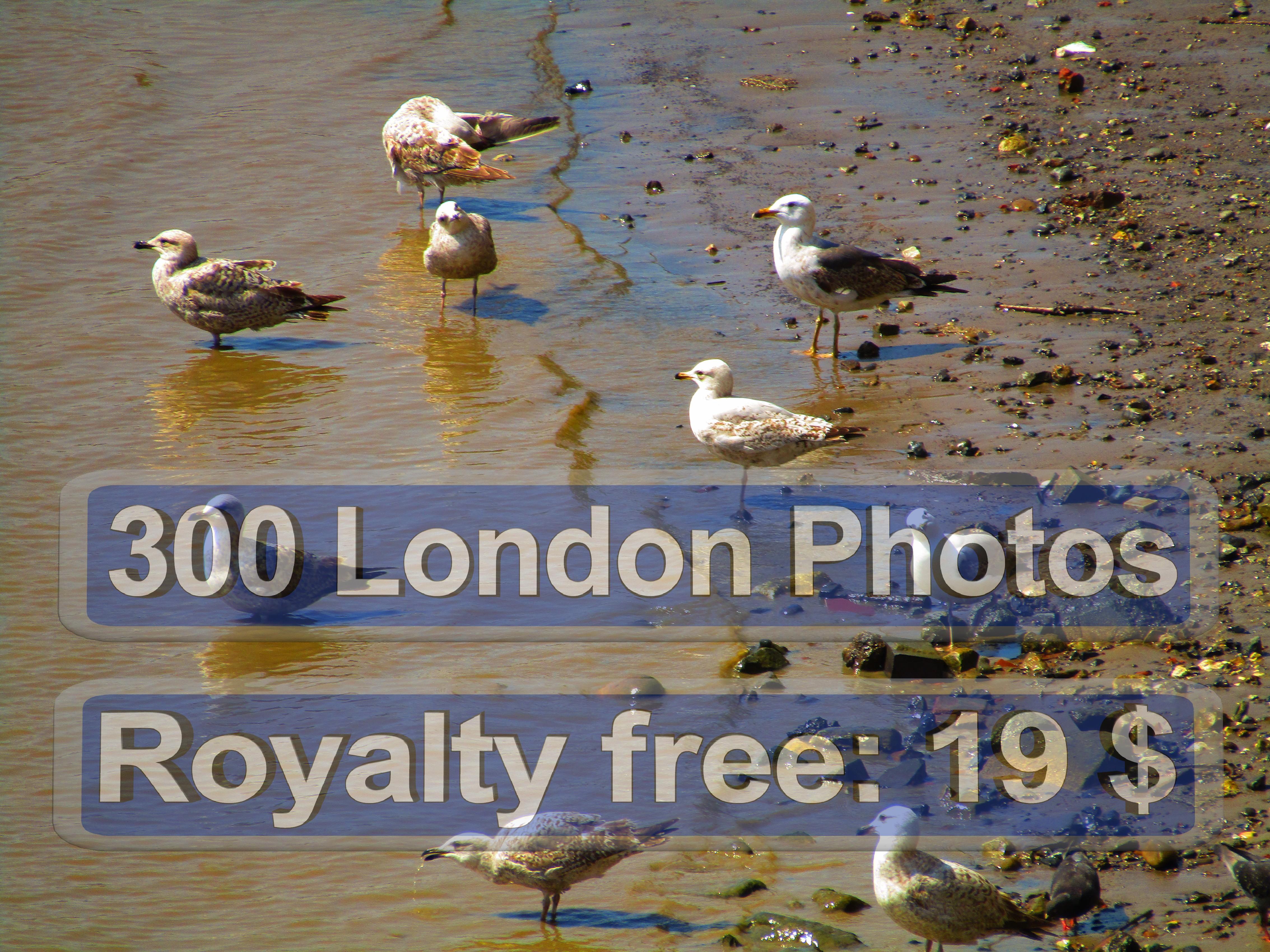 London Photo Galery