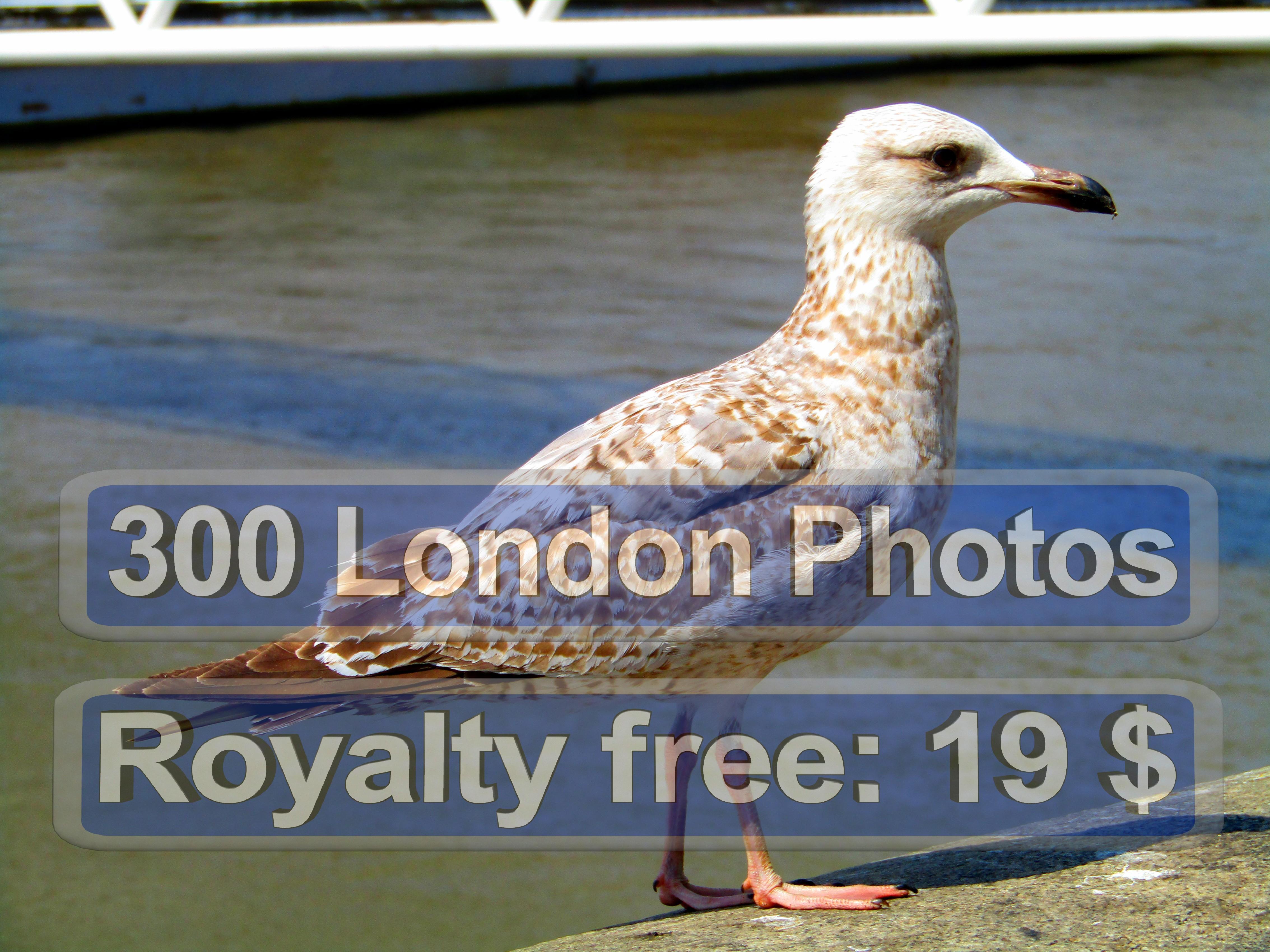 London Photo Gallery Uk