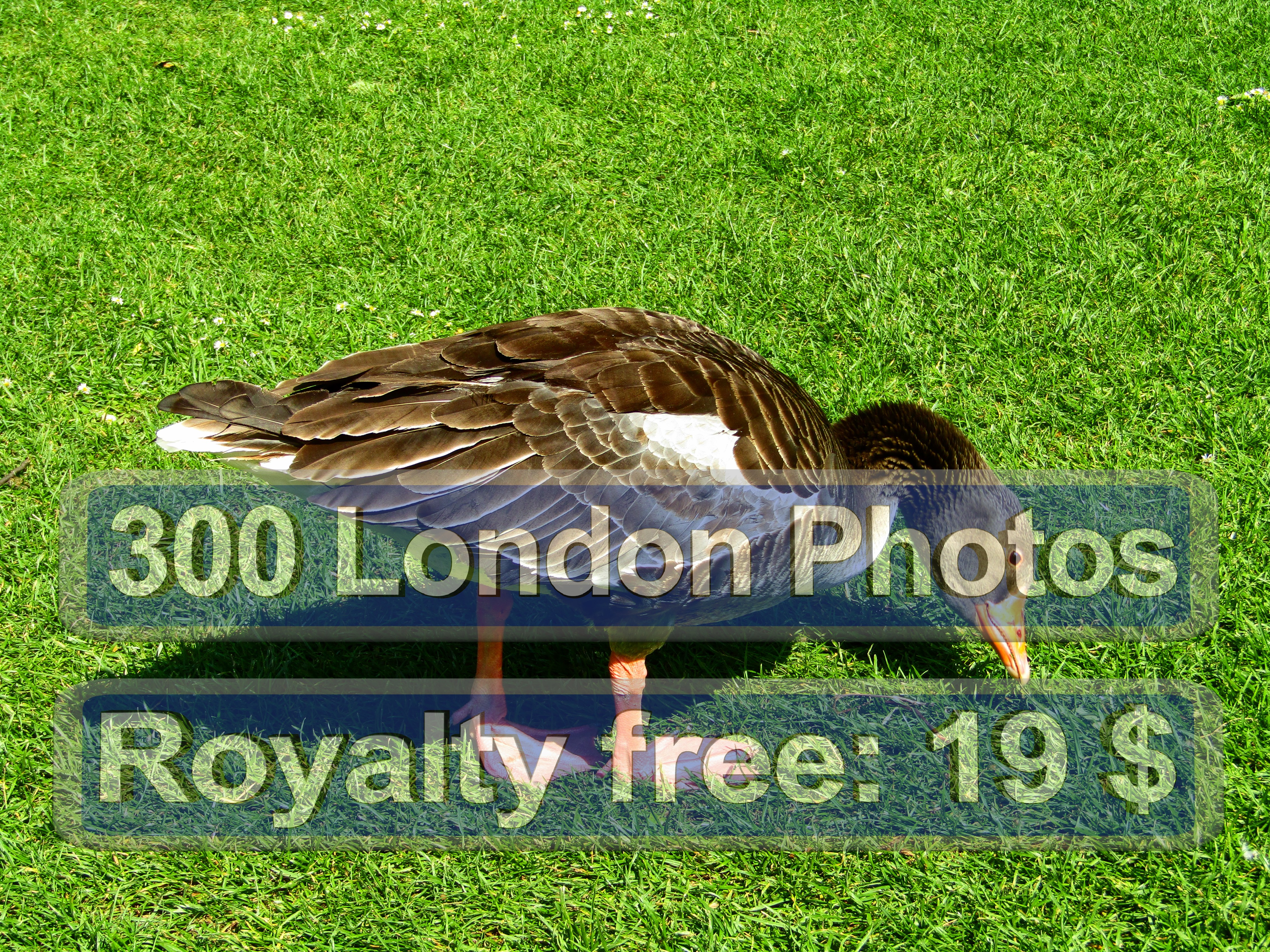 London Queen Photo