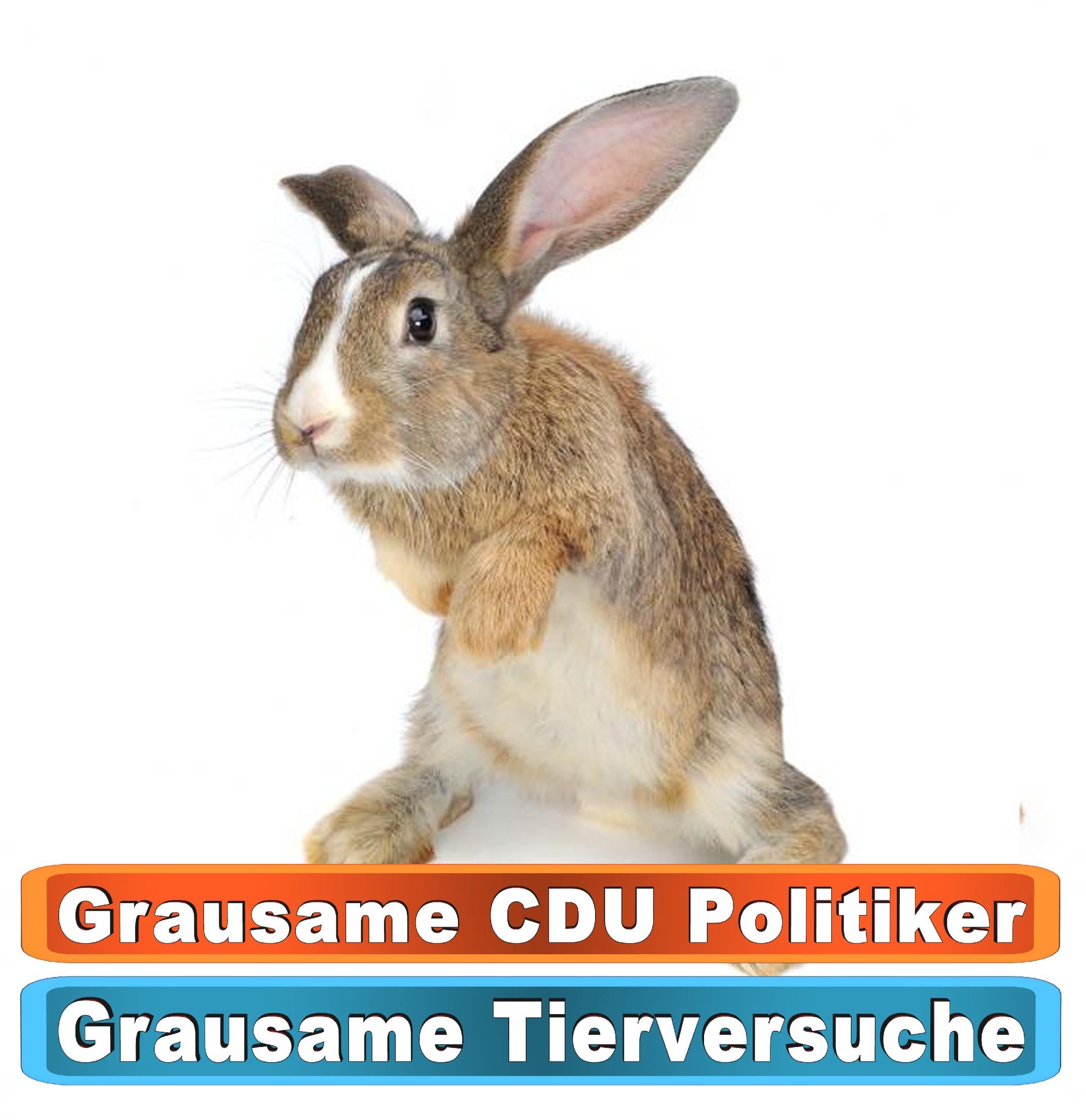 Tierhandlung Darmstadt Youtube