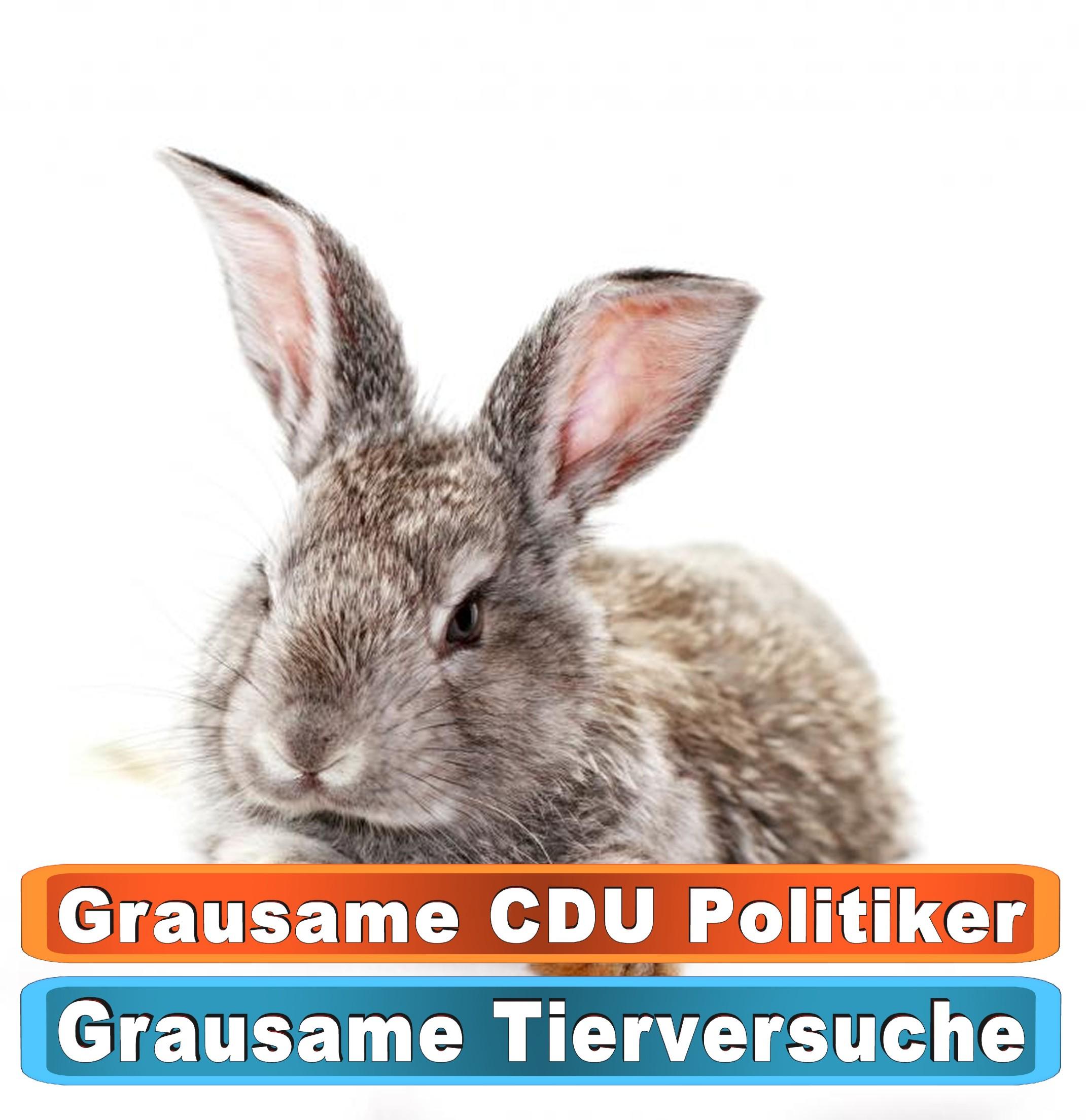 Tierhandlung Flensburg Youtube