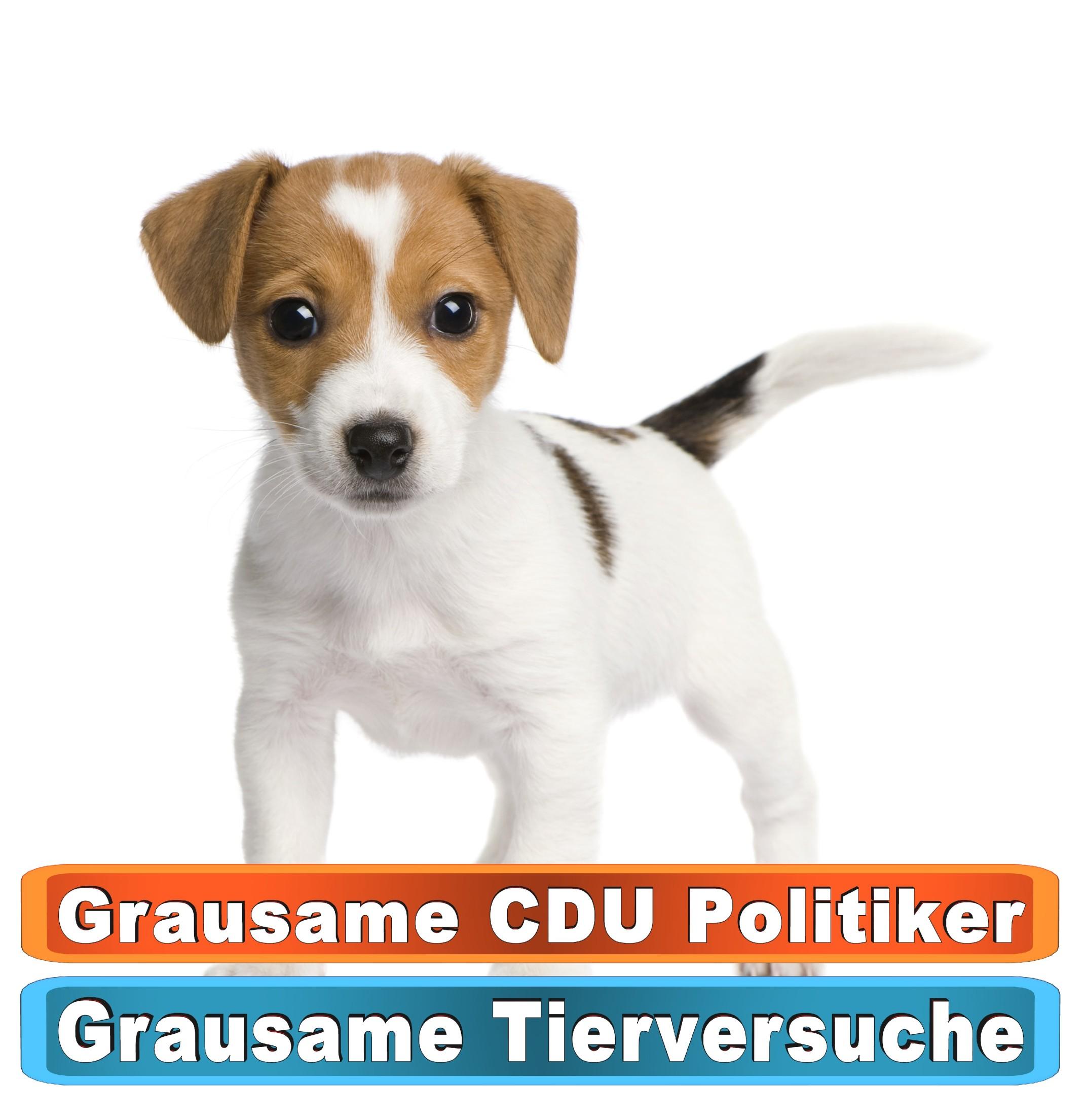 Tierhandlung Frankfurt Youtube