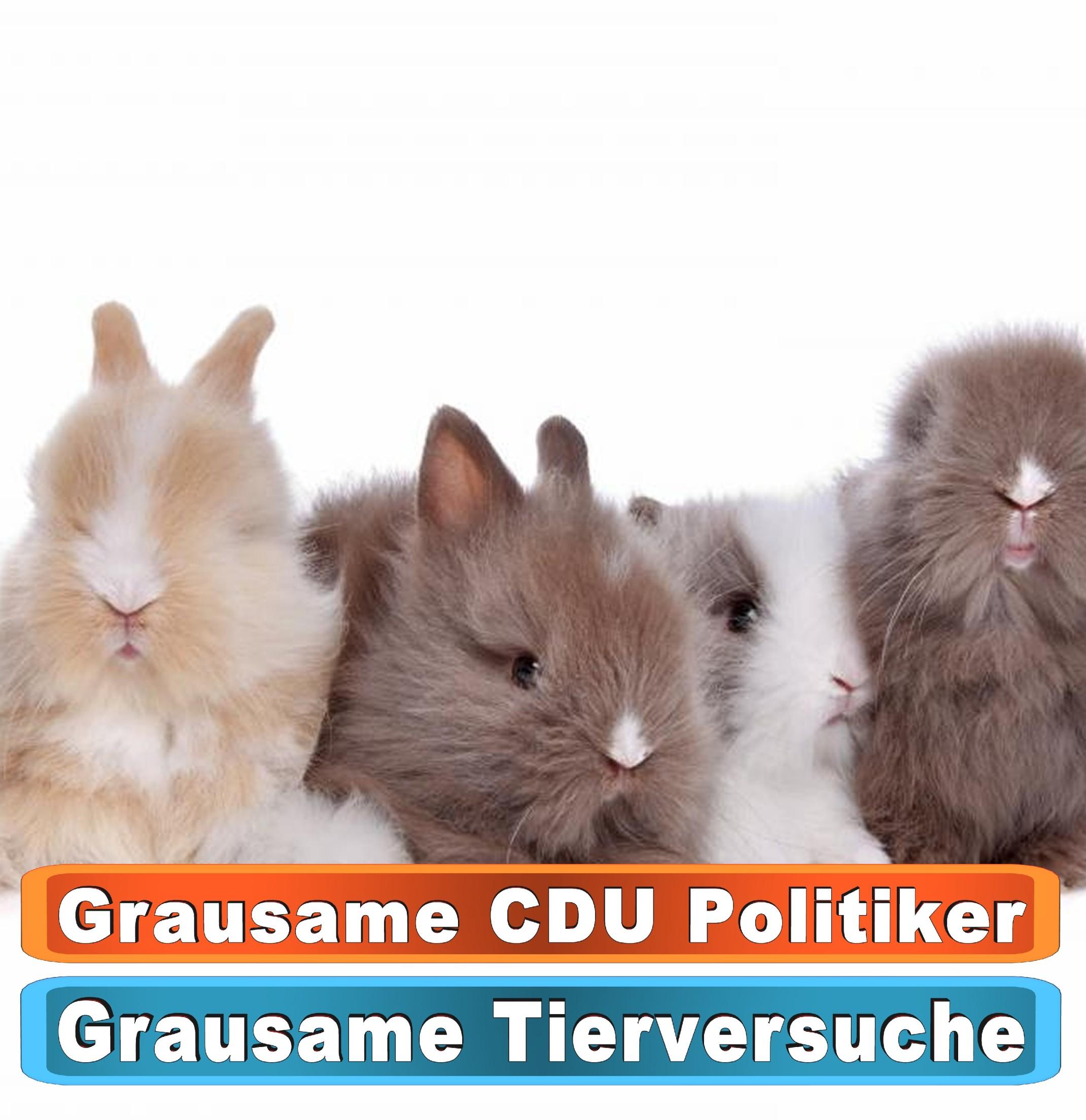 Tierhandlung Freiburg Google Bing Youtube