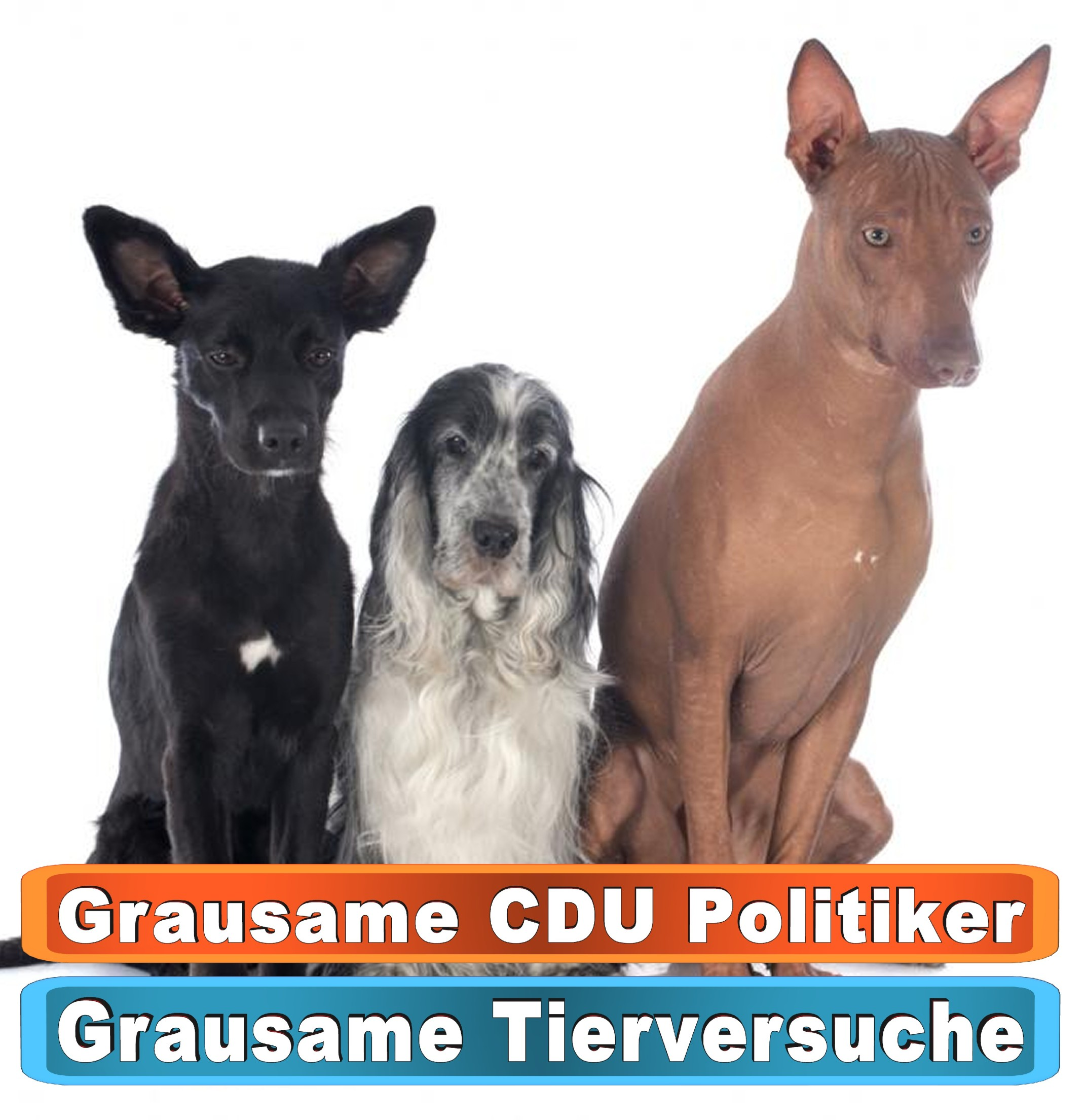 Tierhandlung Fulda Youtube