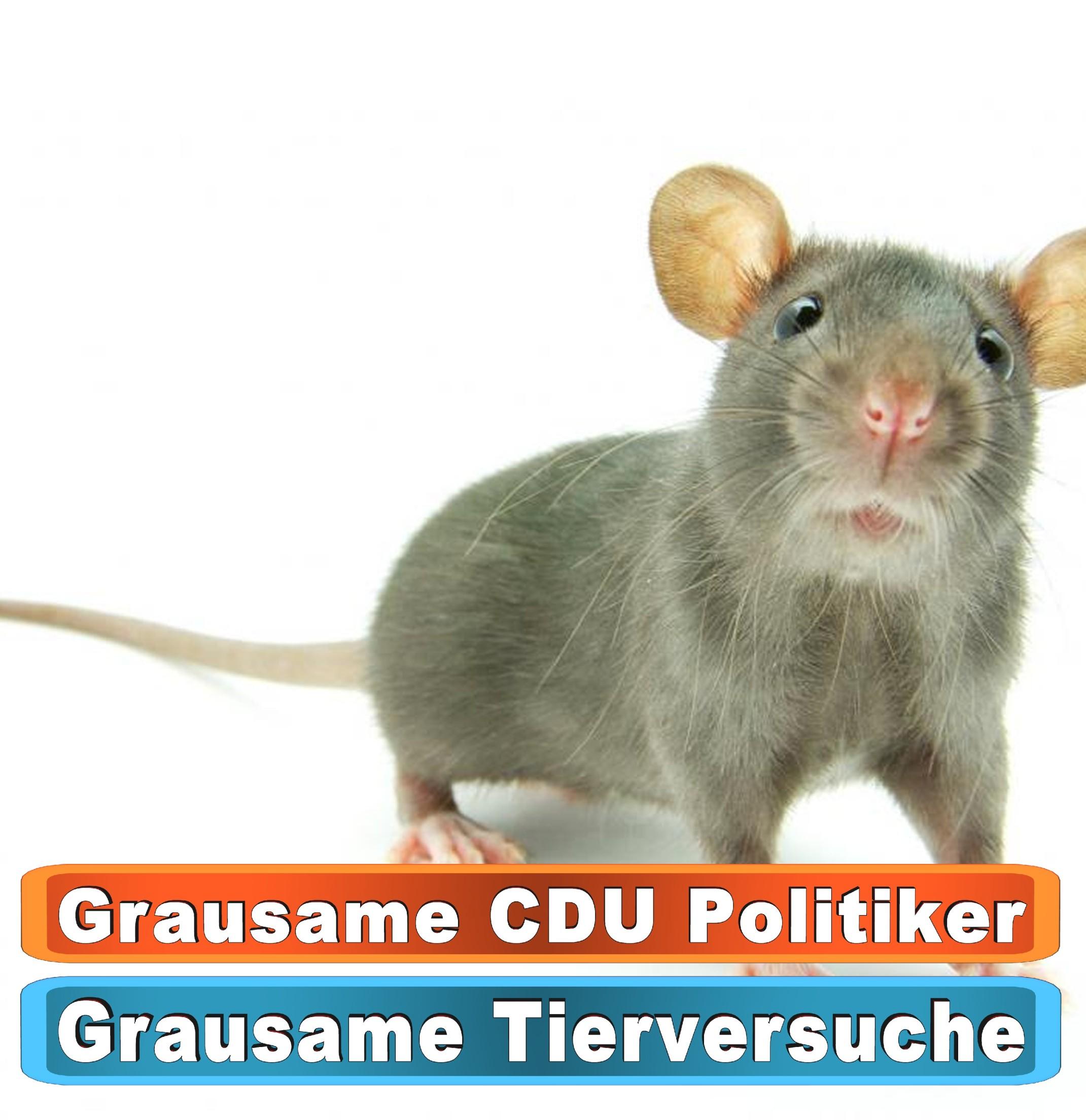 Tierhandlung Heidelberg Youtube
