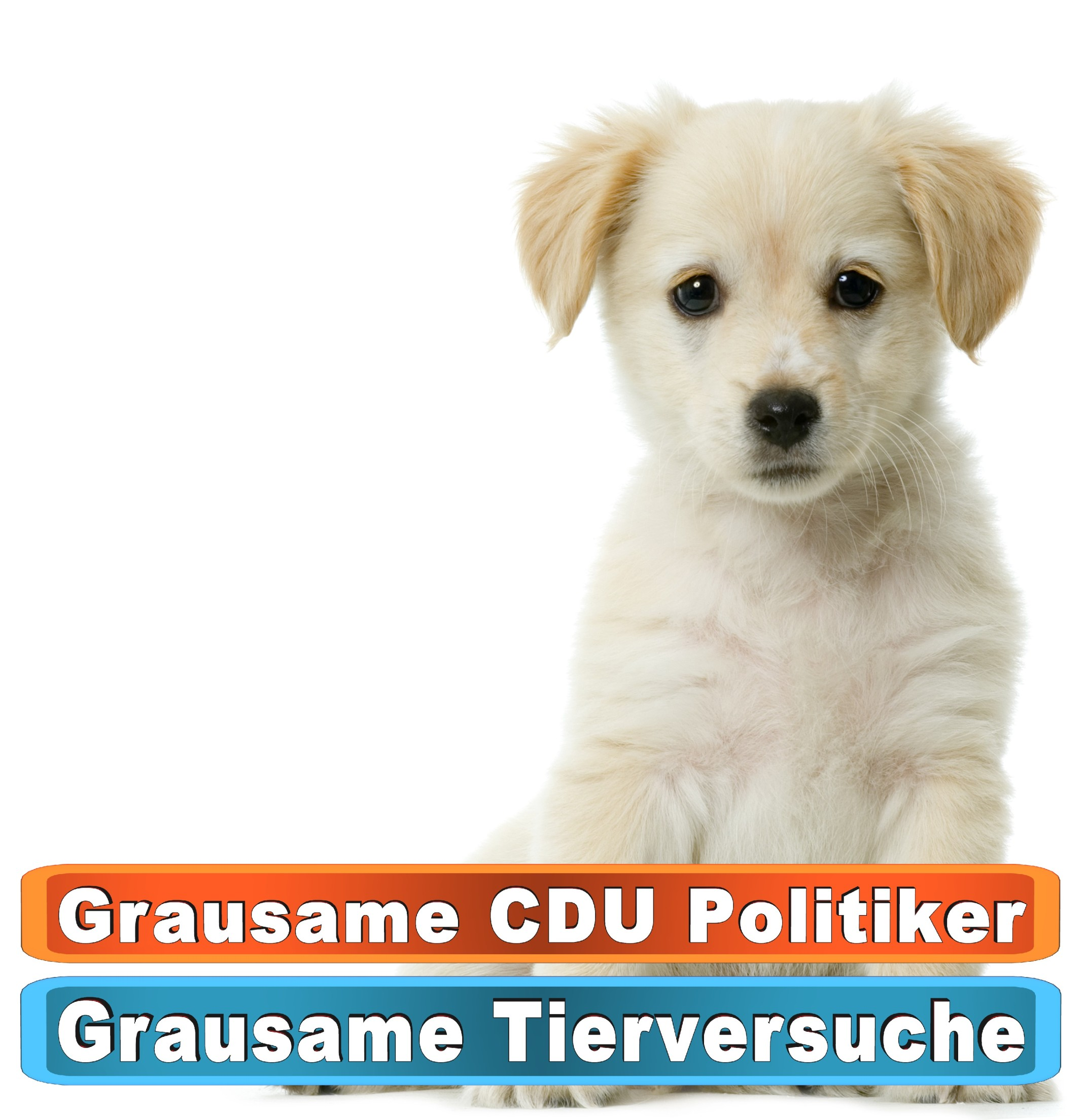 Tierhandlung Lübeck Youtube