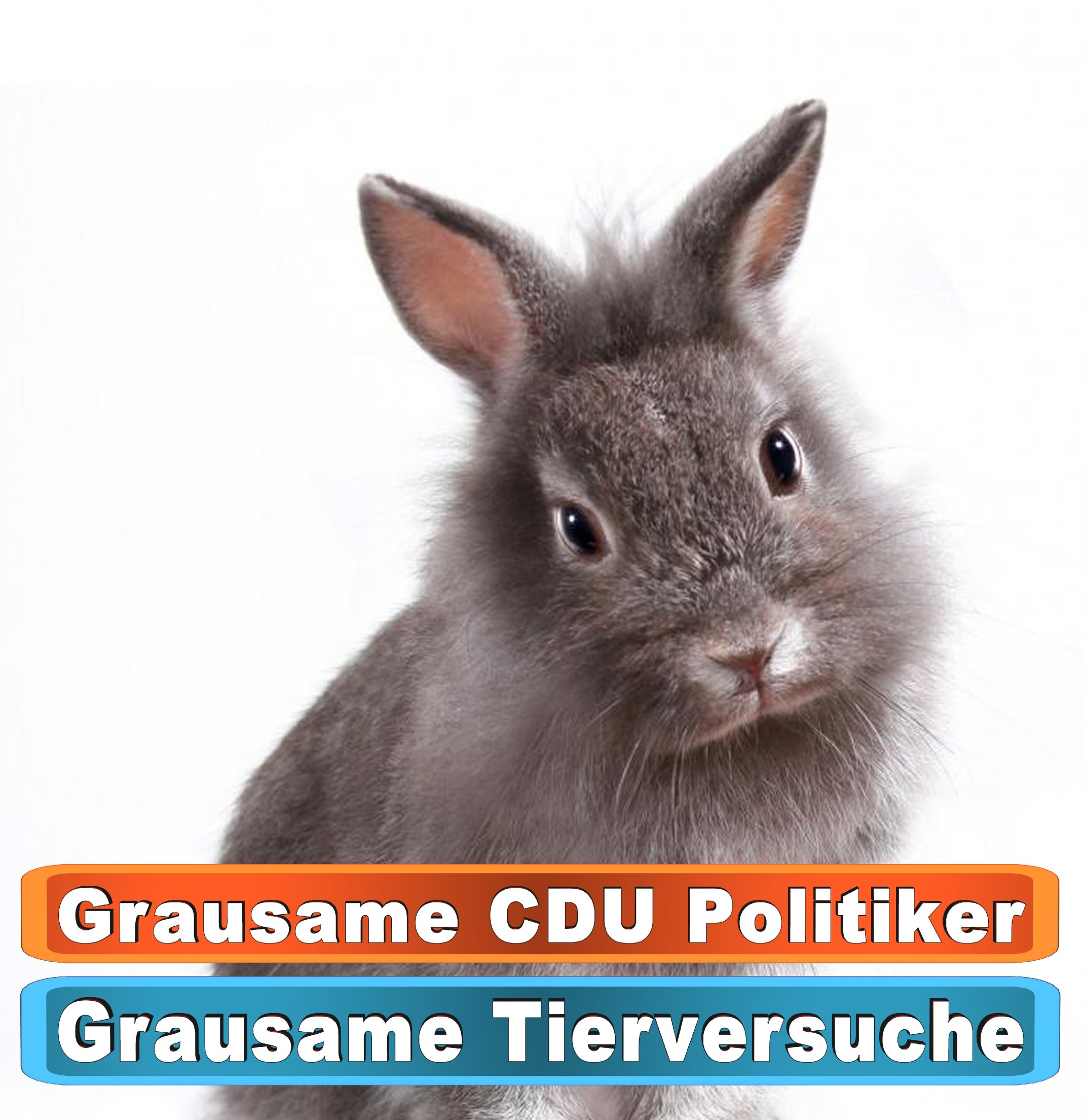 Tierhandlung Limburg Bing