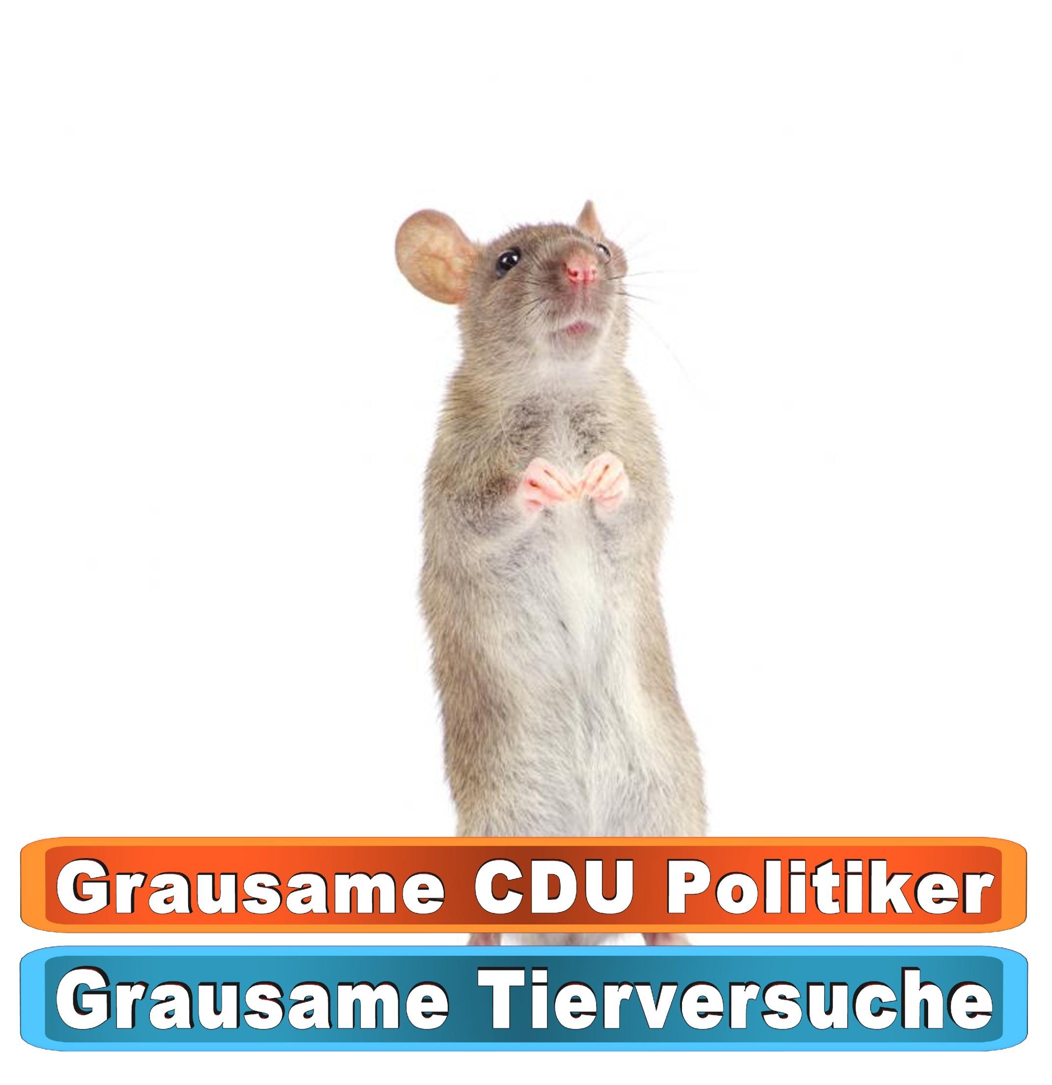 Tierhandlung Mannheim Youtube
