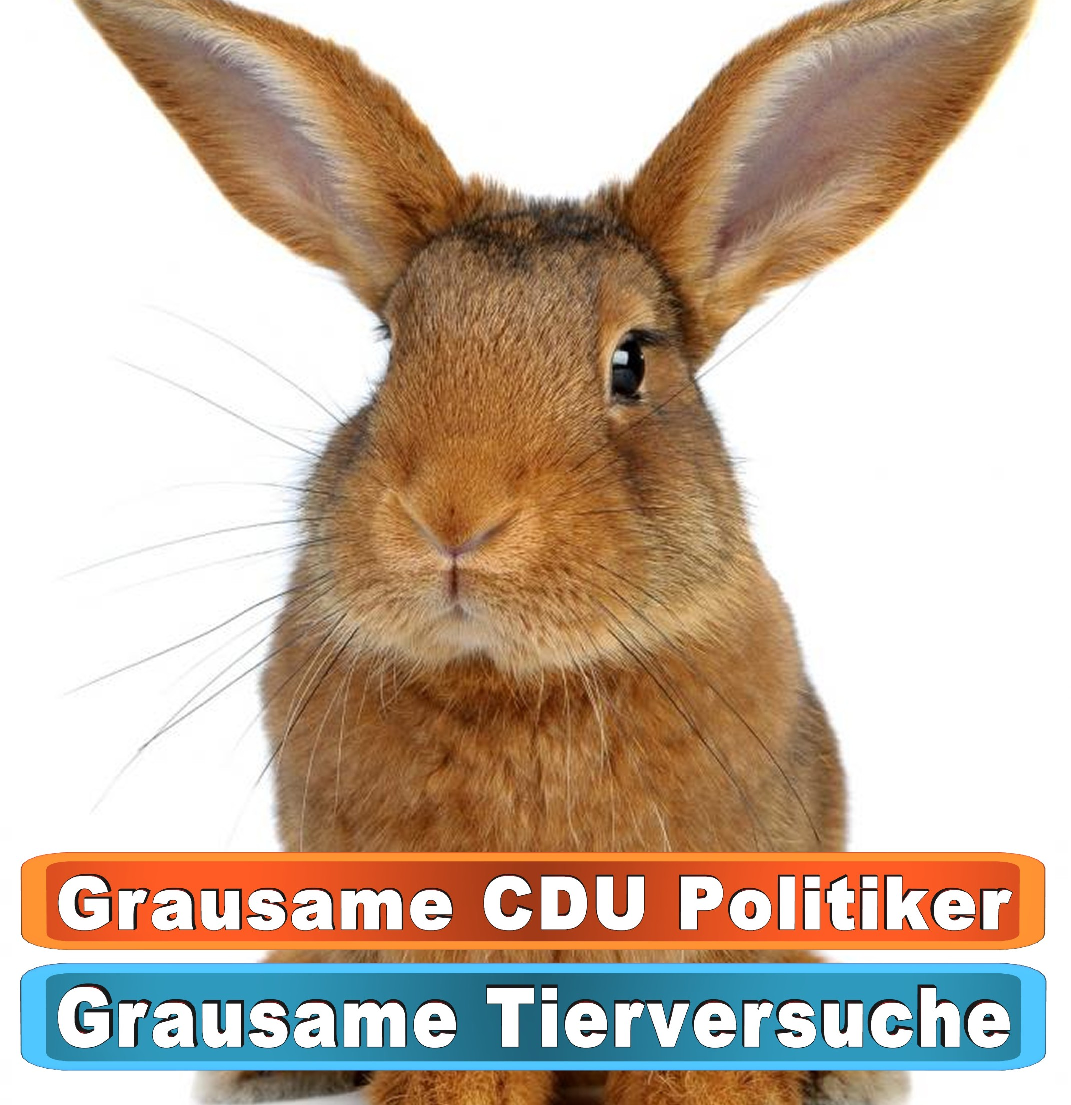Tierhandlung Neubrandenburg Youtube