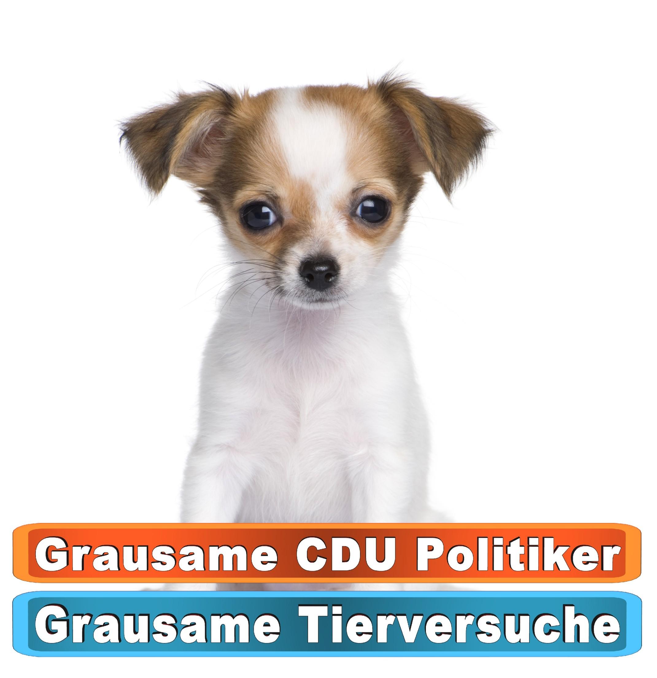 Tierhandlung Potsdam Youtube