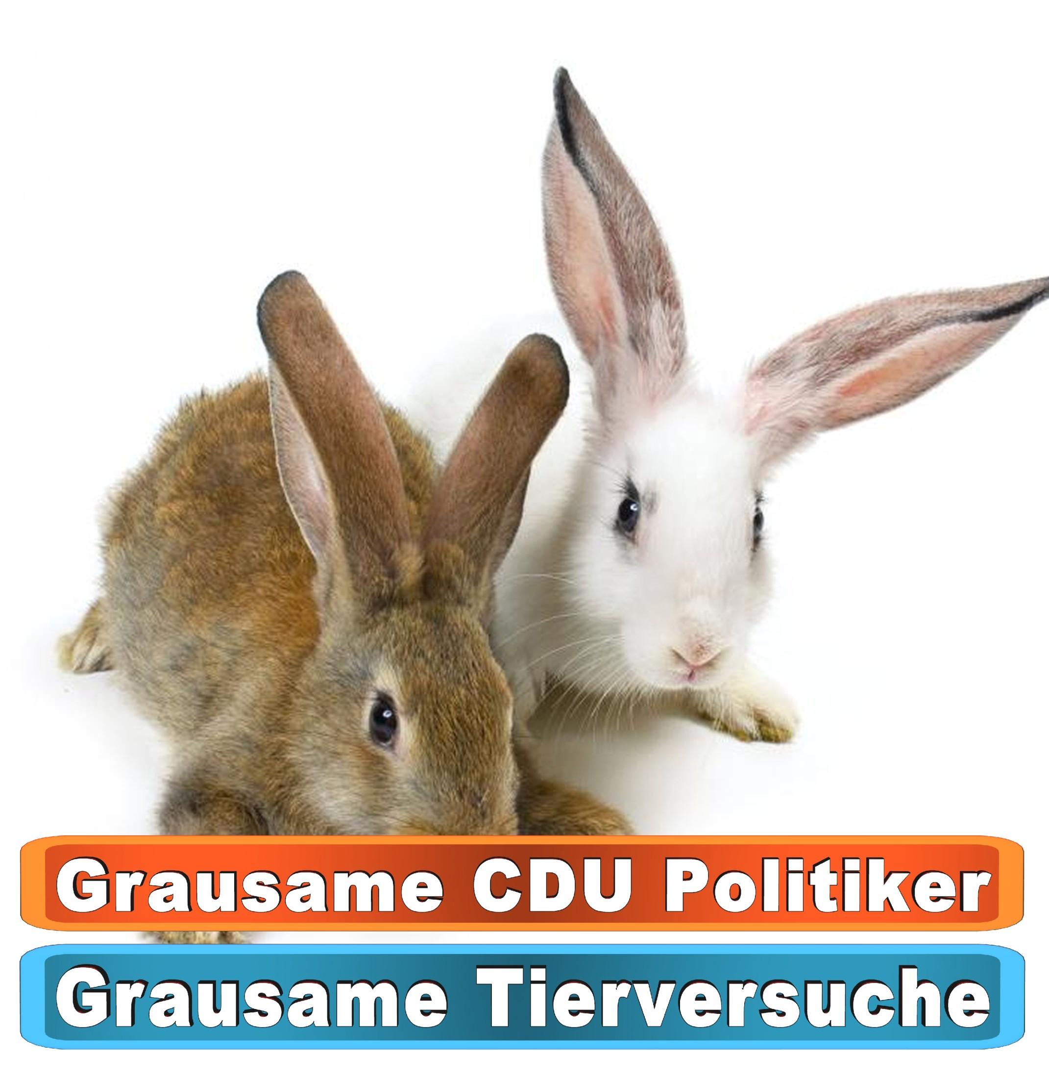 Tierhandlung Regensburg Youtube