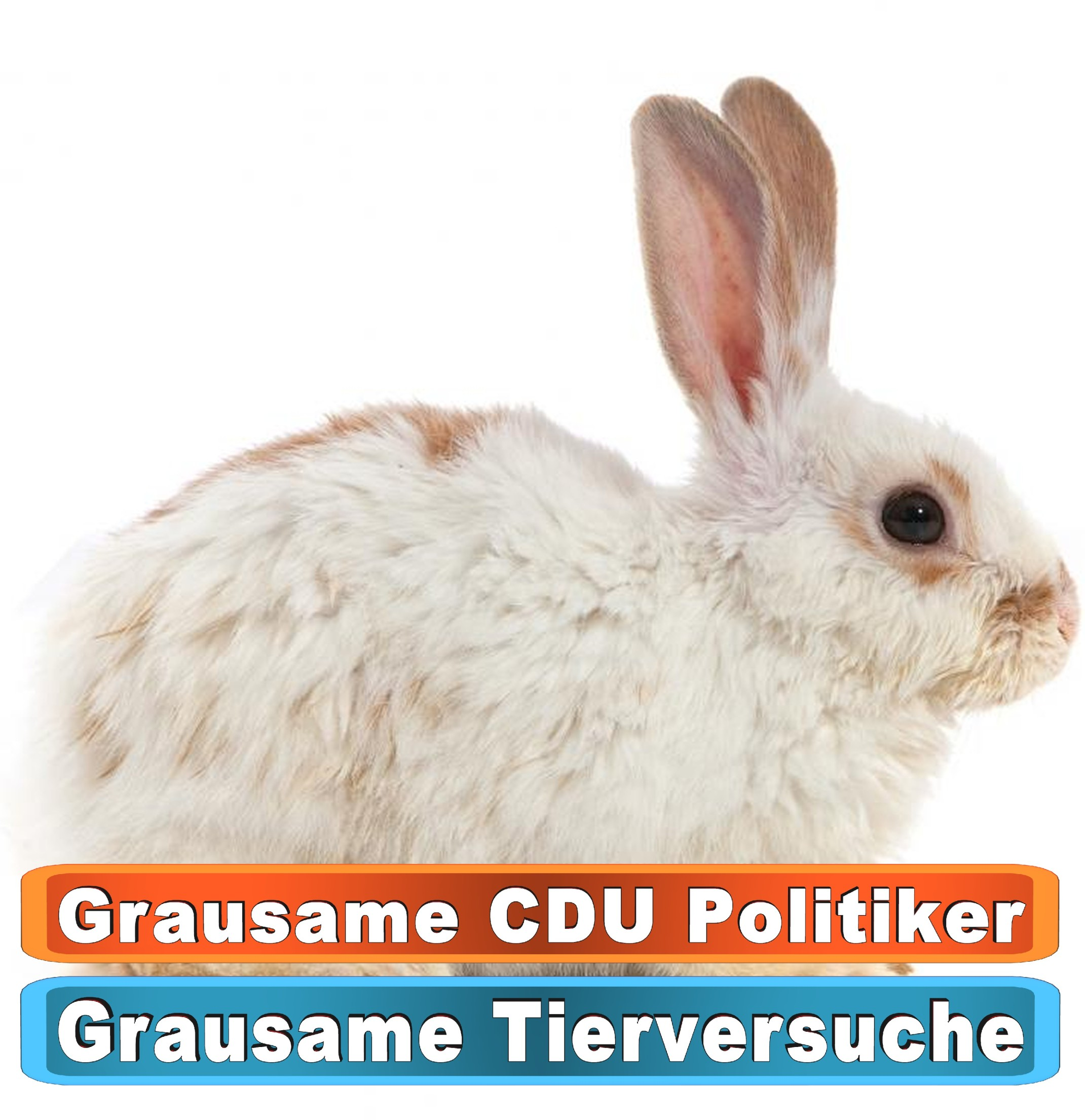 Tierhandlung Schwerin Youtube