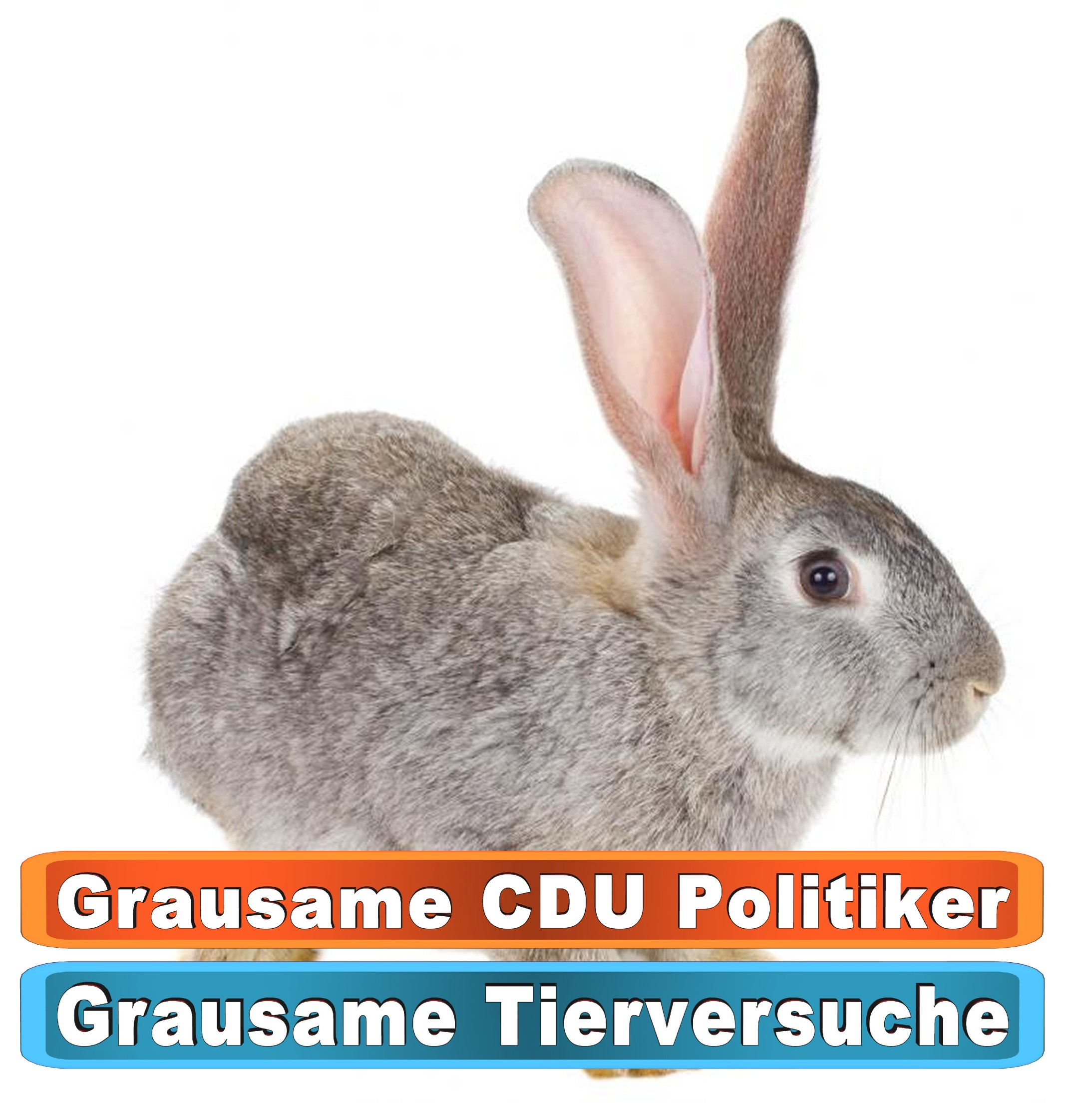 Tierhandlung Tübingen Youtube