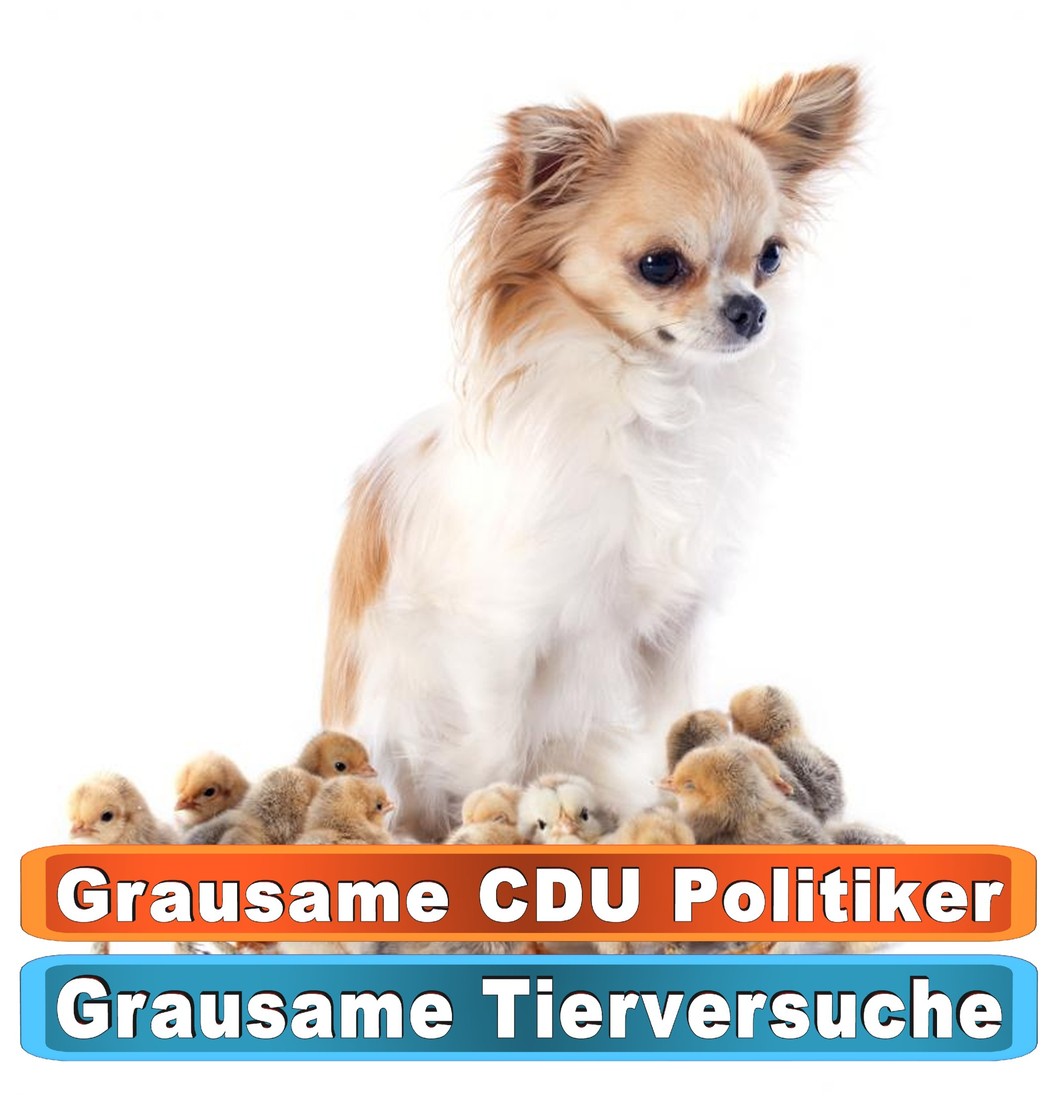 Tierhandlung Ulm Youtube